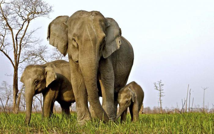 Национальный парк, в котором рейнджеры имеют право убивать браконьеров