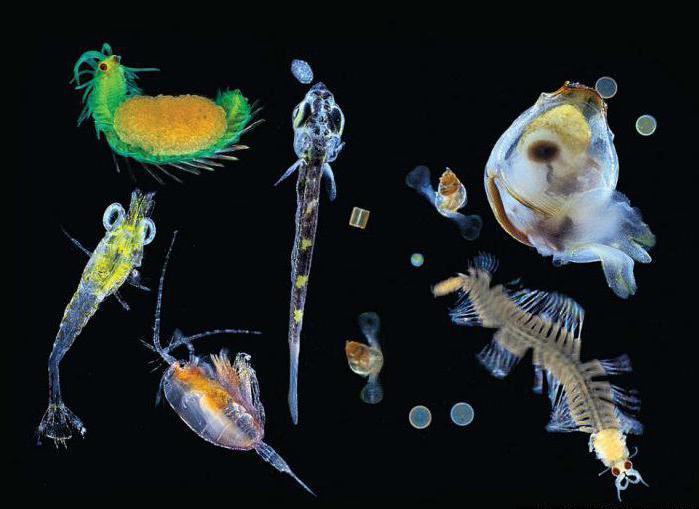 Тихий океан: органический мир и его особенности