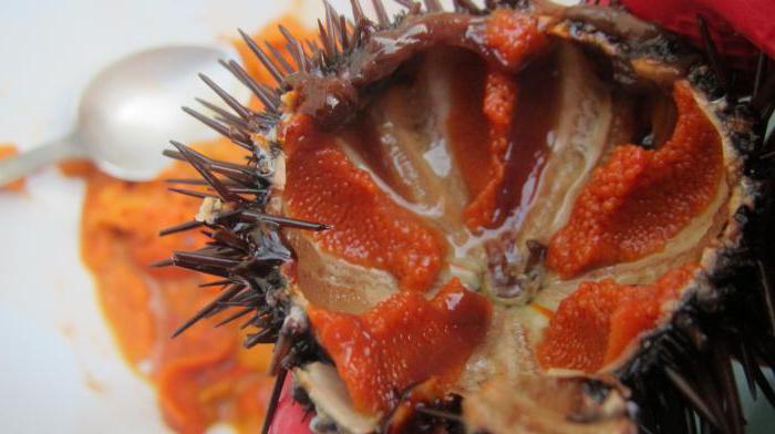 Икра морского ежа: полезные свойства, способы употребления и приготовления