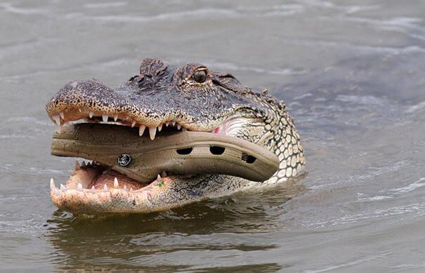 Самые эпичные провалы животных, которые мывидели
