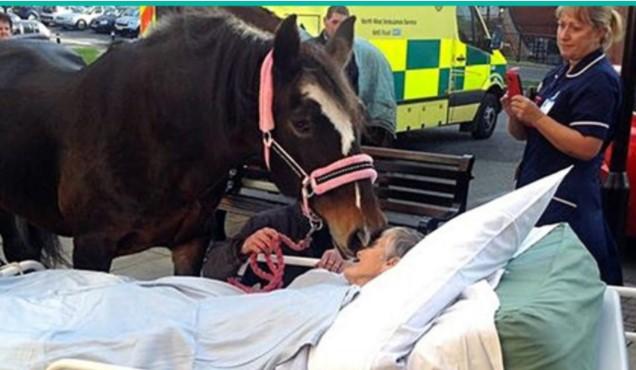 Лошадь пришла попрощаться с хозяйкой. Никто не мог сдержать слез!