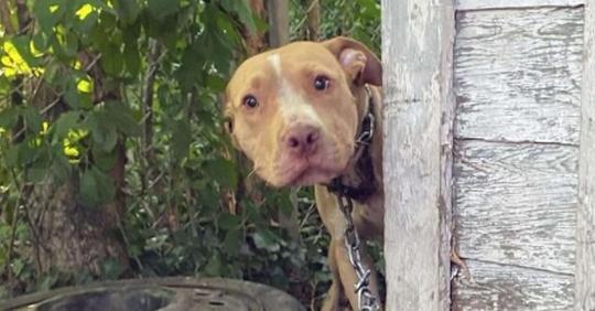Сидевший на цепи пес не может нарадоваться обретенной свободе