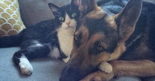 Почувствовав, что пес заболел, мурлыка стал о нем заботиться