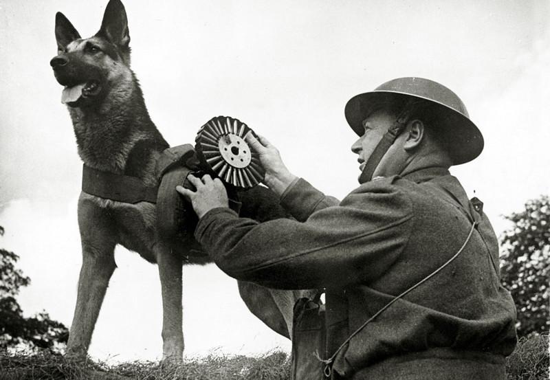 «Пусть эту собаку пронесут на руках по Красной площади на моем кителе…»